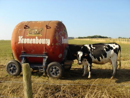 alcool vache
